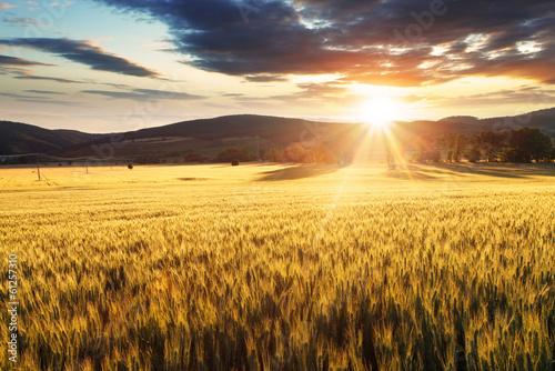 Wheat field - 61257310