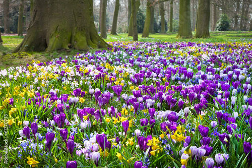 Tuinposter Krokussen Crocuses and narcissus in the park.