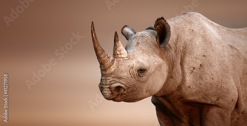 Photo sur Toile Rhino Black Rhinoceros portrait