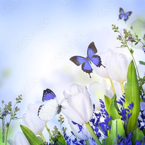 biali-tulipany-z-blekitna-trawa-i-motylem-kwiatowy-tlo