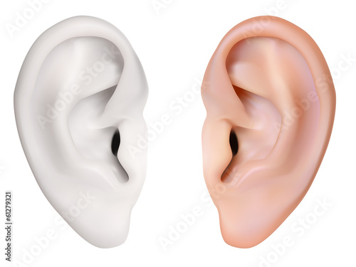 Fotomural Photo-realistic vector. Human Ear. Isolated on white