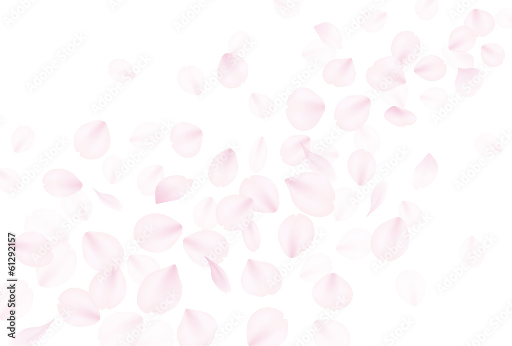 Fototapeta 桜吹雪