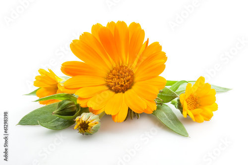 Fotografía  Calendula. Flowers with leaves isolated on white