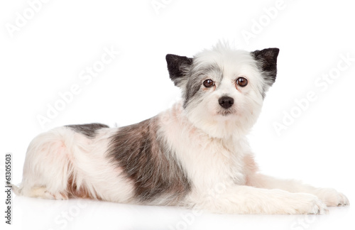 Photographie  mixed breed dog looking at camera. isolated on white background