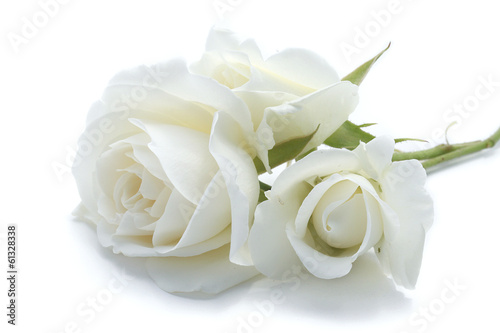 Photo roses blanches
