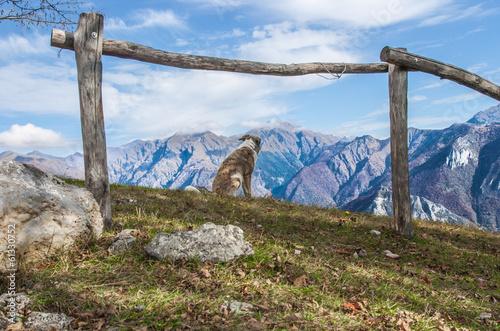 Poster Puma cane sulle vette