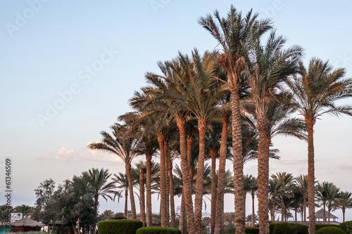 Poster Baobab Palma