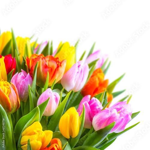 Plakat Tulipanowy bukiet przed białym tłem