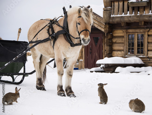 Photo  Horse and rabbits