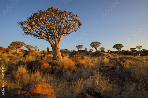 Staande foto Afrika Quiver Trees and Rocks in Quiver Tree Forest