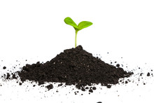 Heap Dirt With A Green Plant S...
