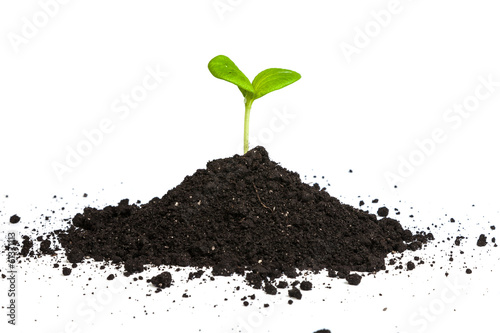 Valokuva  Heap dirt with a green plant sprout isolated
