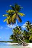 Fototapeta Fototapety z morzem do Twojej sypialni - Exotic  palms on sandy Caribbean beach in Dominicana