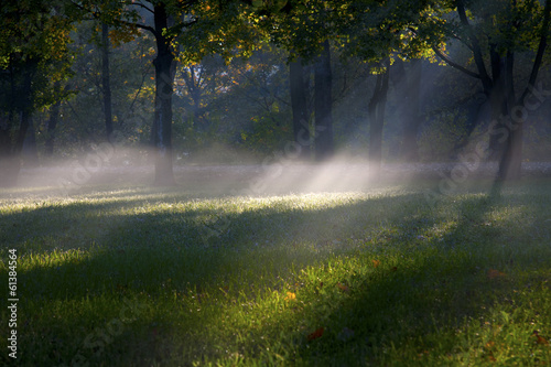 Foto auf Acrylglas Wald im Nebel paesaggio