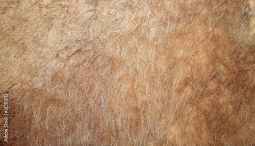 Photo sur Toile Chasse real lion textured pelt