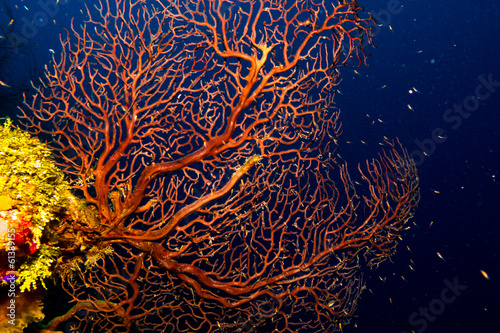 Garden Poster Under water images from caribbean coral reef