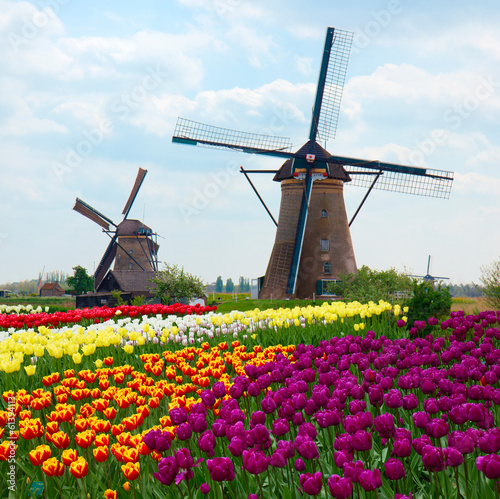 Fotografía  two dutch windmills over  tulips field