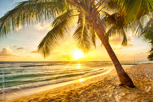Keuken foto achterwand Zwavel geel Barbados