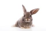 Fototapeta Zwierzęta - kaninchen