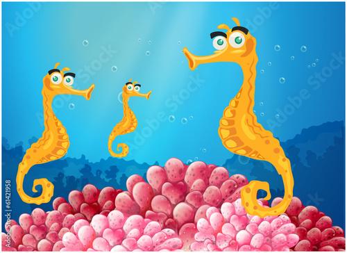 Aluminium Prints Submarine Sea horses near the pink coral reefs