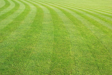 Big Mowed Lawn