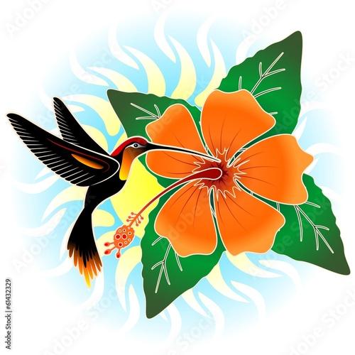Hummingbird and Orange Hibiscus