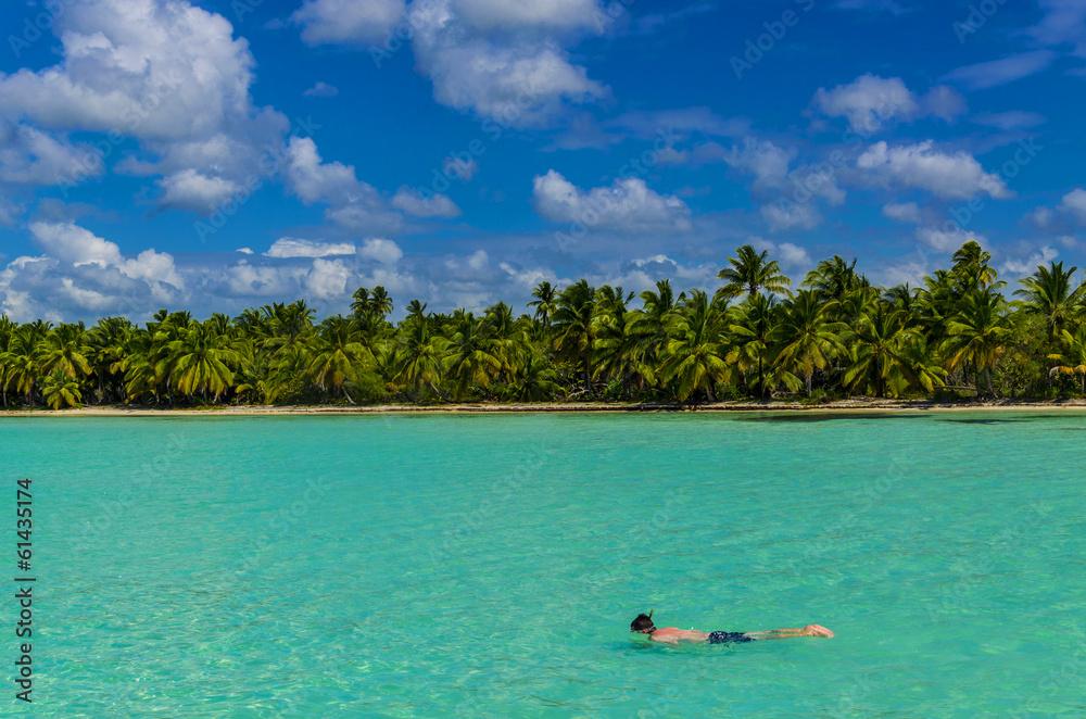 Fototapeta Diving, dive, coast of the Caribbean Islands, Saona, Dominicana