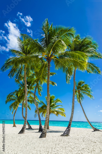 View of an exotic beach with tall palm trees and yellow sand Wallpaper Mural