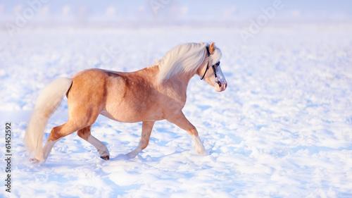Fotografie, Obraz  Stallion on walk.