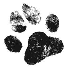 Verwitterter Tierpfotenabdruck Auf Sandigem Untergrund