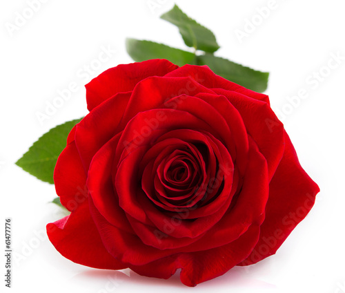 Staande foto Roses Red rose