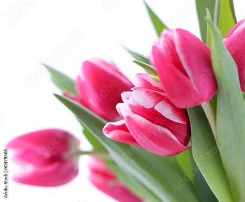 Poster Tulp Pink tulips