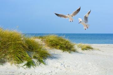 Fototapeta Morze Möwen am Sandstrand