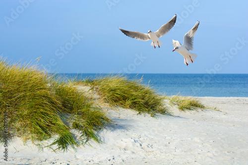 Möwen am Sandstrand