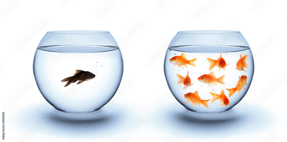 Fototapety, obrazy: fish in solitude - diversity  concept, racism and isolation