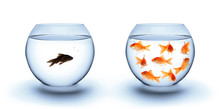 Fish In Solitude - Diversity  ...
