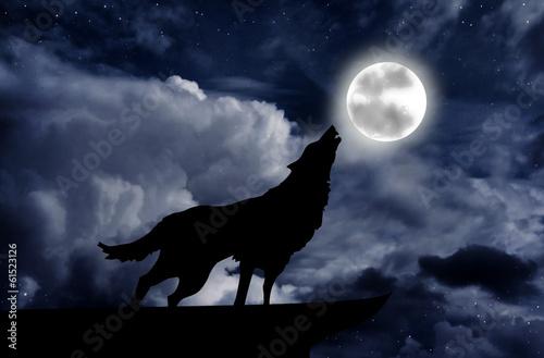 Foto  Wolf heult beim Vollmond