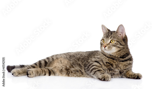 Photo tabby cat lying and looking away. isolated on white background