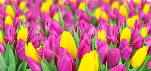 fototapeta piękny bukiet tulipanów