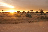 Fototapeta Sawanna - Evening time on the Nullarbor