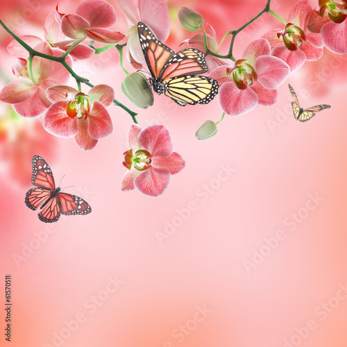 Tuinposter Floral background of tropical orchids and butterfly