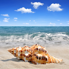 Obraz na Szkle Conch shell on beach