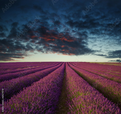 Poster Crimson Vibrant Summer sunset over lavender field landscape
