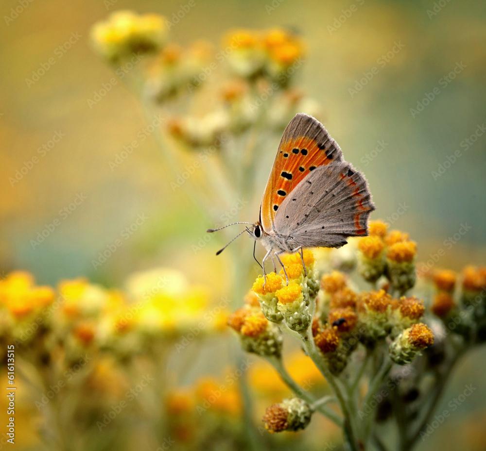 Fototapeta Motyl
