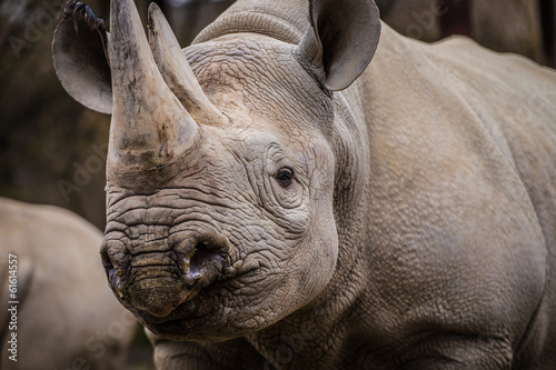 Fényképezés  rhinoceros