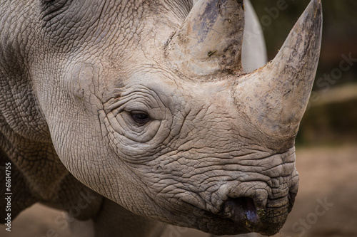 Spoed Foto op Canvas Neushoorn rhinoceros