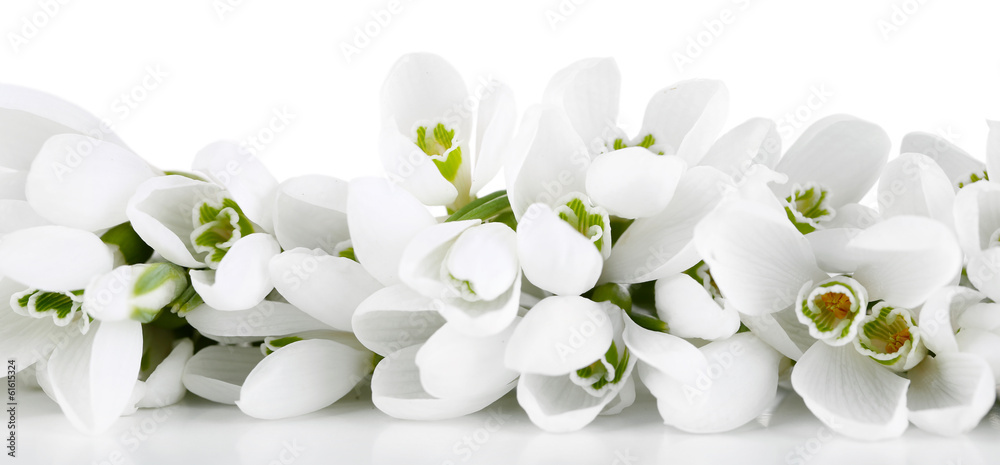 Fototapeta Beautiful snowdrops, isolated on white