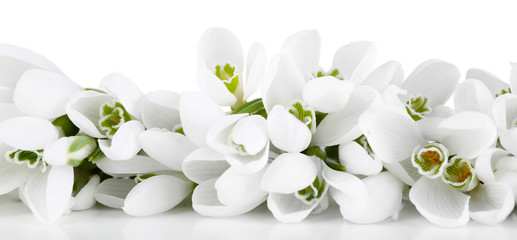 Panel Szklany PodświetlaneBeautiful snowdrops, isolated on white