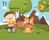 Alphabet.T letter.teeth,toothb rush,tree,tongue,tiger.