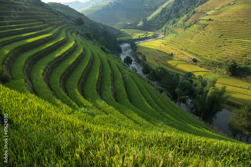 Garden Poster Rice fields Rice field at Mu Cang Chai, Yenbai province, Vietnam
